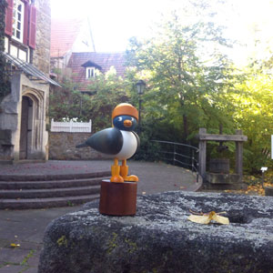 Eine Hamburger Möwe in Reutlingen